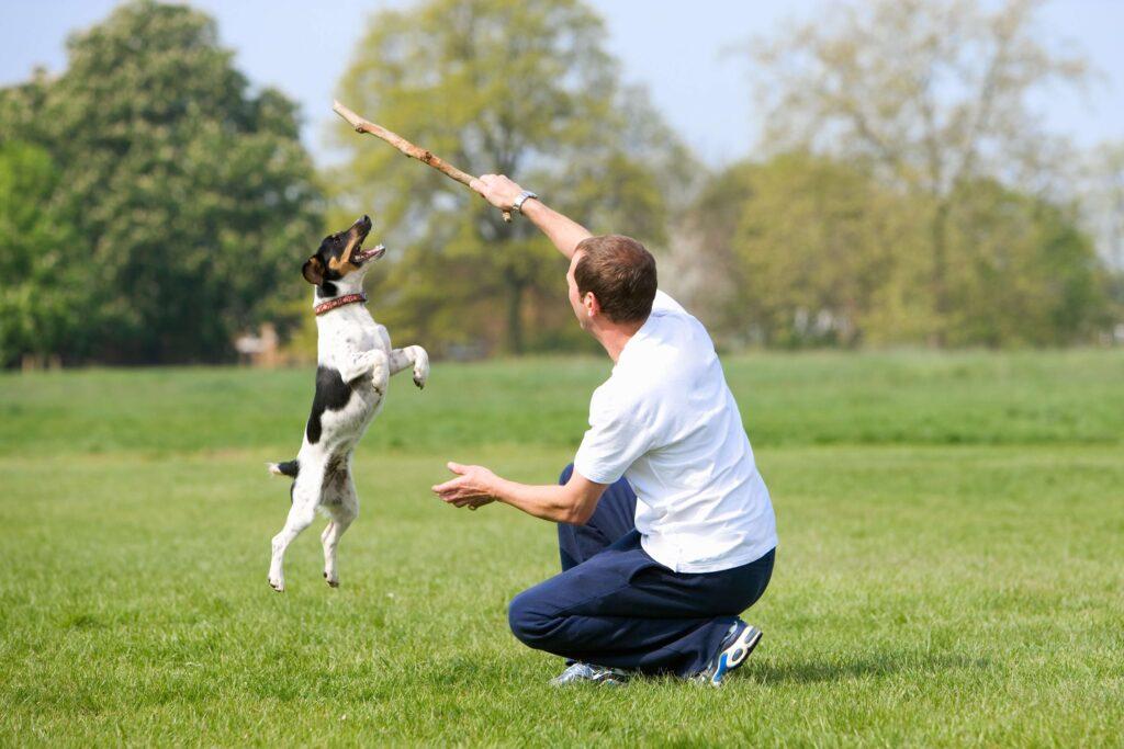 Cão brinca tentando alcançar um galho que seu dono está segurando. Ambos estão em um parque esverdeado.