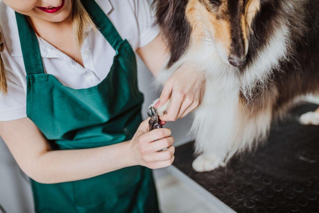 Uma mulher de avental verde corta as unhas de um cachorro com uma equipamento.