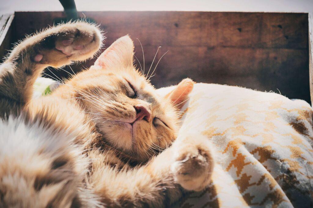 Um gato de pelagem clara se espreguiça em meio ao sol, deitado em um tipo de travesseiro.