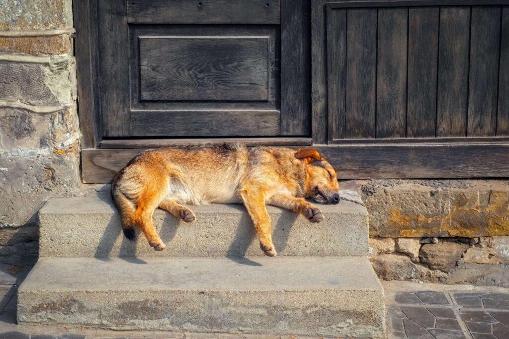 Um cão marrom deitado em uma escada de pedra em frente a uma porta preta desgastada.